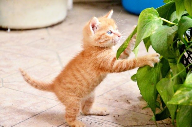 Kitten playing in plants (Foto: Getty Images/iStockphoto)