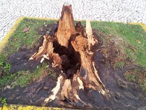 Árvores fecharam ruas e causaram transtornos em Piracicaba (Foto: Leandro Cardoso/G1)
