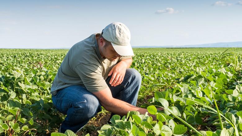 Boas práticas de manejo e controle químico são necessários para que a expectativa de crescimento da produção de soja se torne realidade (Foto: Thinkstock)