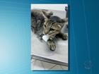 Estudante de medicina que atirou em gata diz que está arrependido