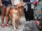 Brasileiros têm 52 milhões de cães e 22 milhões de gatos, aponta IBGE