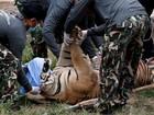 Abade do Templo do Tigre tailandês nega acusações de tráfico de animais