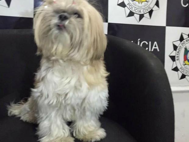 Cachorro foi resgatado após ser roubado (Foto: Polícia Civil/Divulgação)