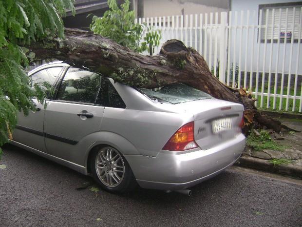 Árvore cai e atinge carro no bairro Chacara do Visconde, em Taubaté. (Foto: Luciano Rodrigues da Fonseca/VC no G1)