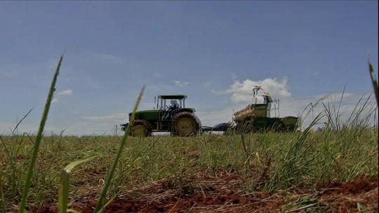 Venda antecipada de soja não deslanchou em Mato Grosso