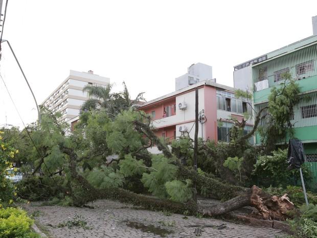 Ruas estão interditadas por quedas de árvores  (Foto: Jefferson Botega / Agência RBS)
