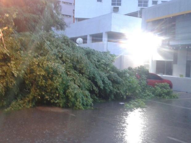 Árvore caiu na Avenida Santos Dumont, nos Aflltos (Foto: Cacyone Gomes/TV Globo)