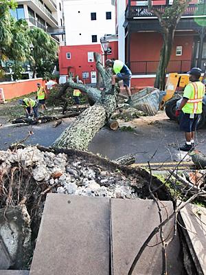 Trabalhadores usam motoserra para remover árvore que caiu após passagem do furacão Gonzalo nas Bermudas (Foto: David Skinner/AP Photo)
