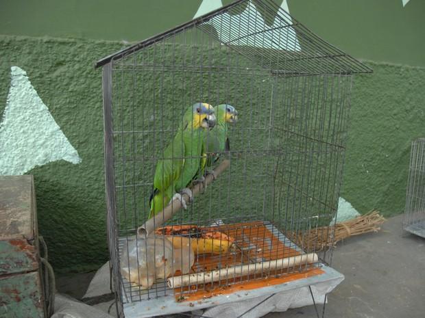 Pássaros estão entre os animais mais capturados pela Polícia Ambiental (Foto: Gil Oliveira/G1)