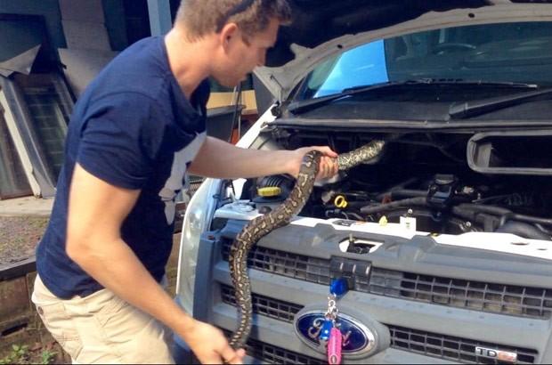 Cobra foi capturada após ser flagrada no motor de veículo na Austrália (Foto: Reprodução/Facebook/Sunshine Coast Snake Catchers)