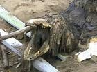 Veja criaturas bizarras que geraram medo quando foram descobertas
