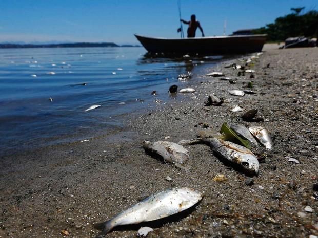 Baía de Guanabara amanheceu com peixes mortos (Foto: Ricardo Moraes/Reuters)