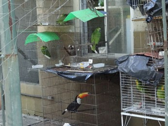 Cativeiro da sede do Ibama serve como centro de reabilitação dos animais apreendidos (Foto: Priscila Miranda / G1)