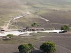 Projeto prevê abater cerca de 5 mil búfalos em reservas ambientais de RO