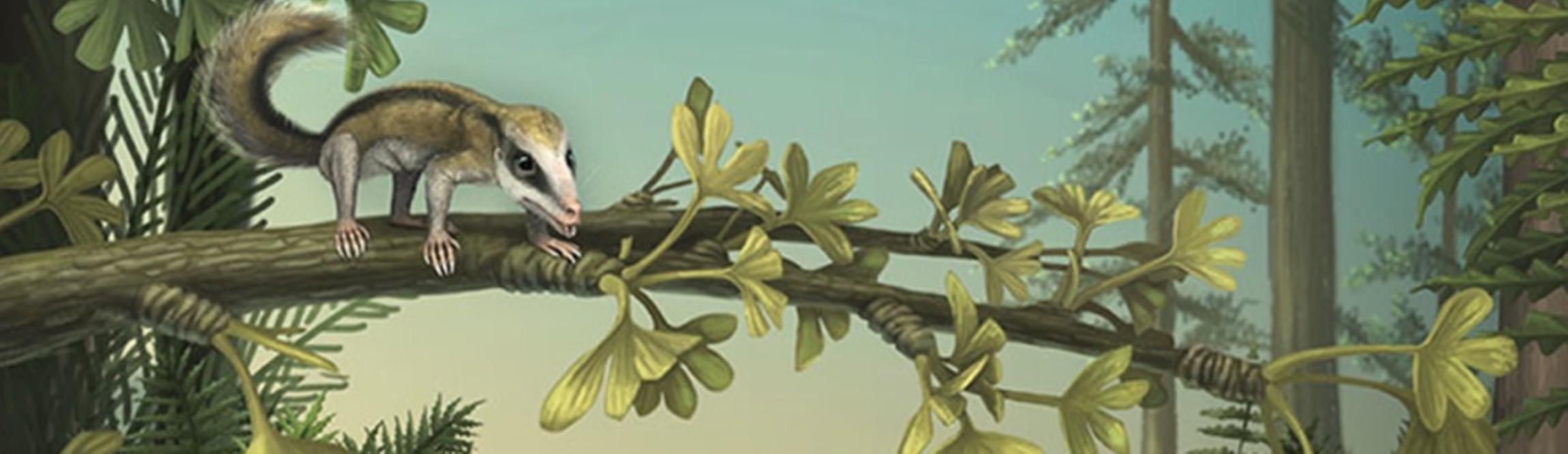 desenho retrata o Agilodocodon scansorius (Foto: reprodução)