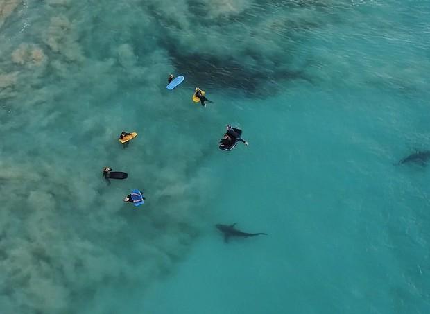 Tubarões próximos  às crianças  (Foto: Divulgação/Sean Scott )