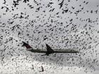 Avião cruza 'nuvem' de pássaros durante pouso nos EUA