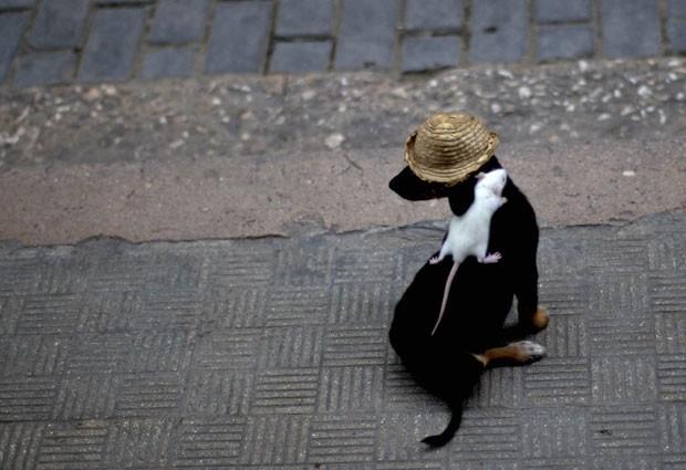 O cachorro chamado 'Negrito' virou atração em Havana, em Cuba, por levar um rato em suas costas. O dono dos animais, Miguel Díaz, mostra a amizade entre seus pets para turistas com o objetivo de conseguir contribuições em dinheiro. (Foto: Ramon Espinosa/AP)