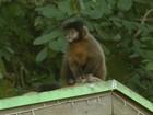 Macaco encontrado morto em Águas da Prata, SP, estava com febre amarela