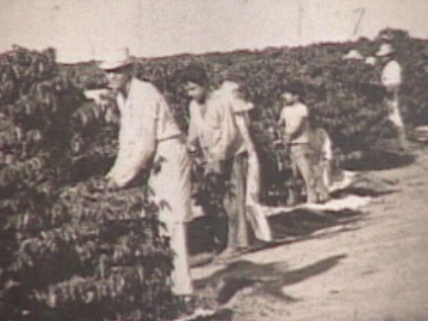 Toda manutenção dos cafezais e as colheitas eram feitas a mão (Foto: reprodução/TV Tem)