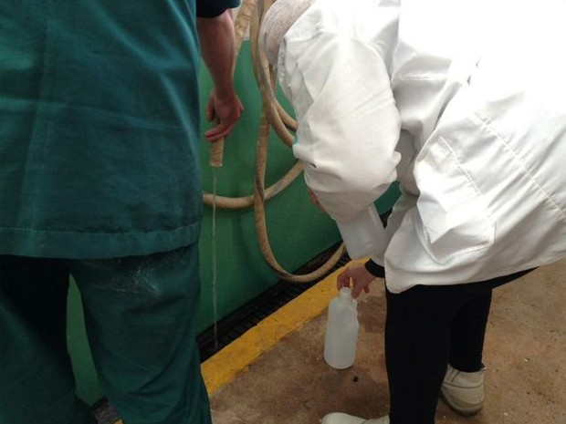 Segundo o MP, água era adicionada ao leite (Foto: Marjuliê Martini/MP)