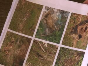 Polícia investiga a morte de quase 60 cães no município (Foto: Reprodução/TV Gazeta)