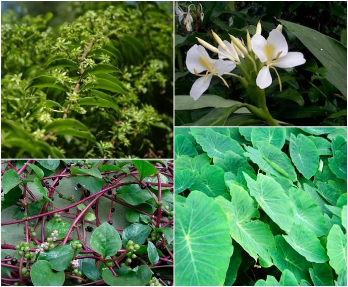 690Mistura com Rodaika Inspiração plantas colagem (Foto: Montagem sobre fotos de Divulgação e Giselda Person)