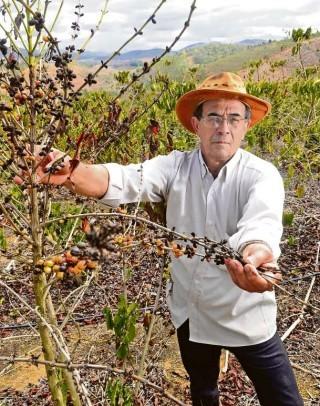 Produtor rural esperava colher 2.500 sacas, mas por causa da seca colheu só 300 (Foto: Ricardo Medeiros/ A Gazeta)