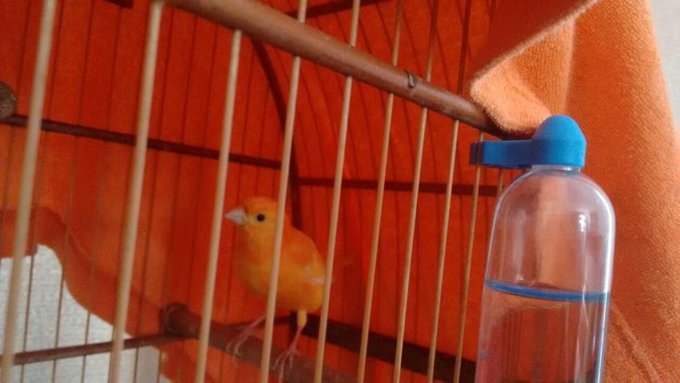 Pássaros também precisam de cuidados no inverno (Foto: Mariana Bonora/G1)