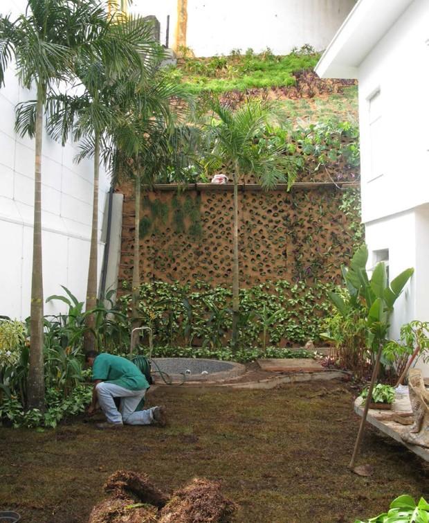 Sobre as placas de fibra de coco, Gabriela plantou guiambês, singônios, costelas-de-adão e bulbines (Foto: Casa e Jardim)
