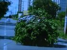 Flagrante mostra carro 'disfarçado de árvore' em avenida de Goiânia; veja