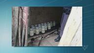 Polícia apreende mais de 300 kg de palmito ilegal em Cajati
