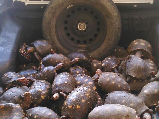 Animais foram apreendidos em Posto da Polícia Rodoviária Federal de Teófilo Otoni (Foto: Divulgação PRF)