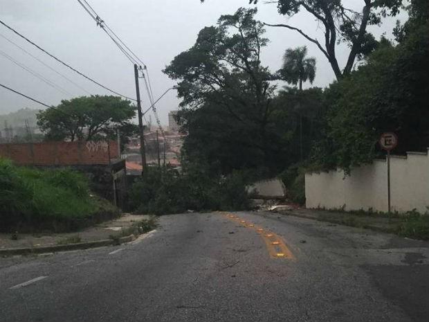 Árvore caiu na rua Fernando Luís Grohman e derrubou parte do muro do zoológico de Sorocaba (Foto: Rodrigo Ruivo/Top Fm)