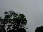 Chove forte nas regiões do Pantanal e norte de MS na quinta-feira, diz Inmet