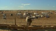 Pecuaristas esperam que mercado da carne estabilize depois da retomada das exportações