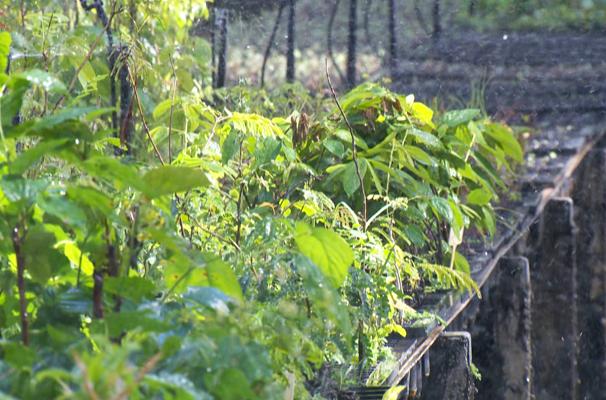 Irrigação é solução para regiões que não chovem com frequência (Foto: Reprodução TV Fronteira)