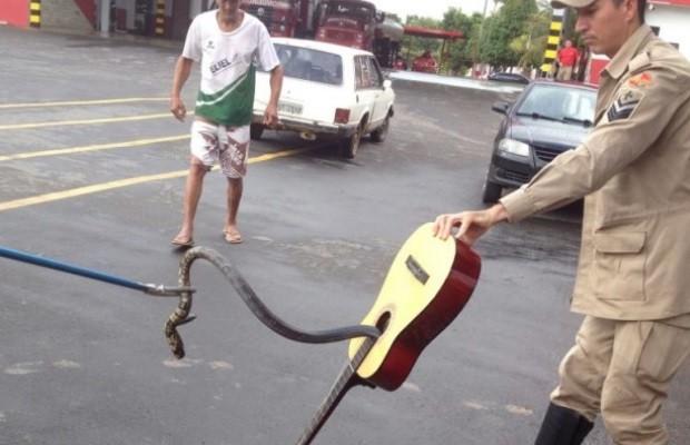 Bombeiros retiram cobra de 1 m escondida dentro de violão, em Goiás (Foto: Divulgação/Corpo de Bombeiros)