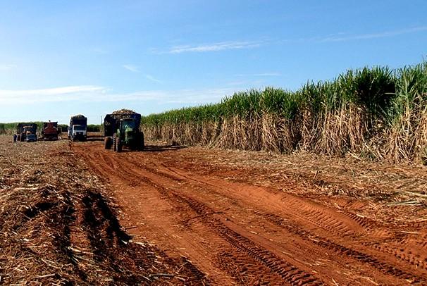Produção do setor sucroalcooleiro vem crescendo na região (Foto: Reprodução/TV Fronteira)