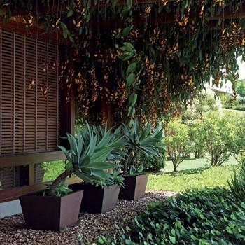 Cuidados com as plantas: as regras do mínimo esforço