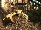 Usineiros e produtores enfrentam uma das piores crises da cana
