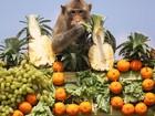 Macacos ganham banquete em templo na Tailândia