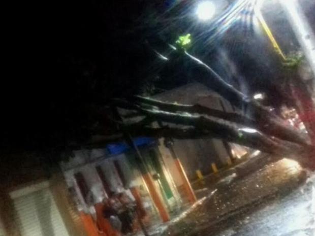 Uma das árvores caiu em um prédio comercial, mas apenas o telhado foi danificado.  (Foto: Reprodução/TV Verdes Mares)