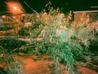 Ventos em Macapá ultrapassam 40 km/h e causam prejuízos a moradores