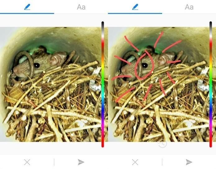 Facebook Messenger permite desenhar nas fotos enviadas (Foto: Felipe Alencar/TechTudo)