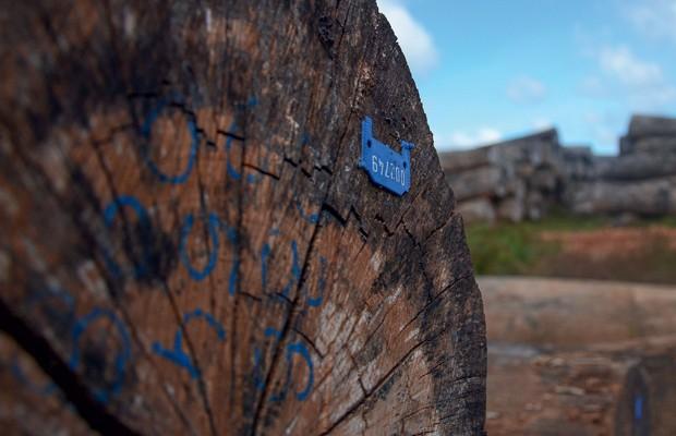 Brasil;Meio Ambiente;Amazônia;rg da madeira Etiqueta de identificação garante a rastreabilidade – e ajuda a provar que o produto vem de área certificada (Foto: Odair Leal)