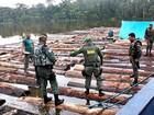 Mais de 430 toras de madeira são apreendidas em operação, no AM