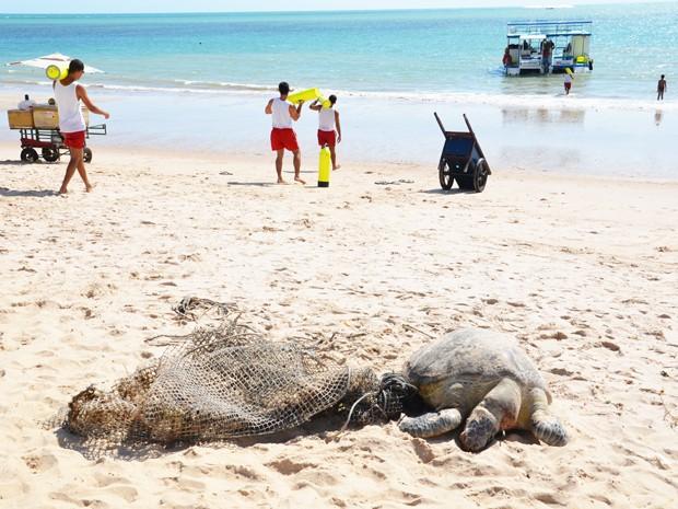 Um tartaruga marinha foi encontrada morta na manhã desta terça-feira (11) na Praia de Tambaú em João Pessoa. Cordas e uma rede de pesca foram encontradas ao lado do animal. A suspeita é que ela tenha ficado presa na rede e morrido (Foto: Walter Paparazzo/G1)