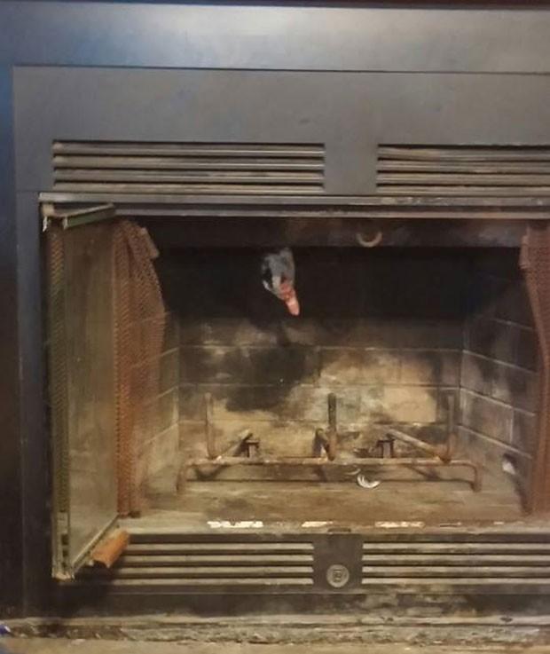 Pato ficou entalado na chaminé de casa em Slidell (Foto: Reprodução/Facebook/St. Tammany Fire Protection District)
