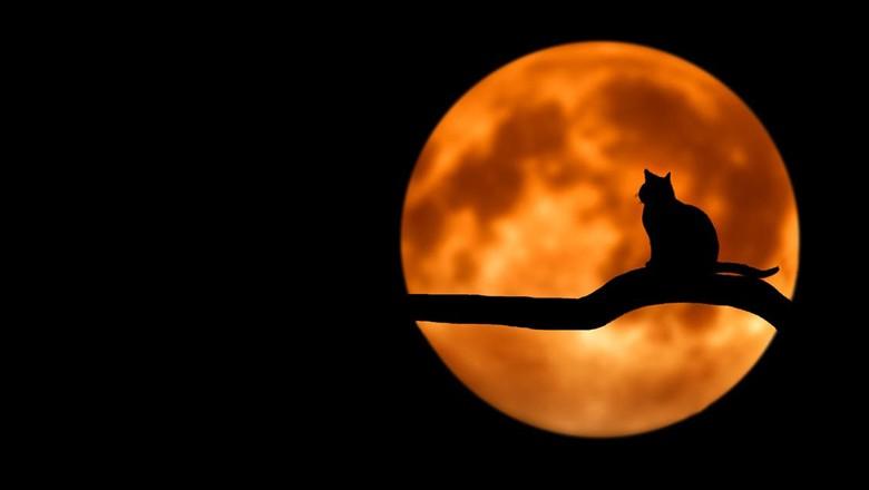 noite-lua-gato (Foto: Pexels)